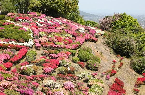 歌垣公園のツツジの様子の写真(小高い山)