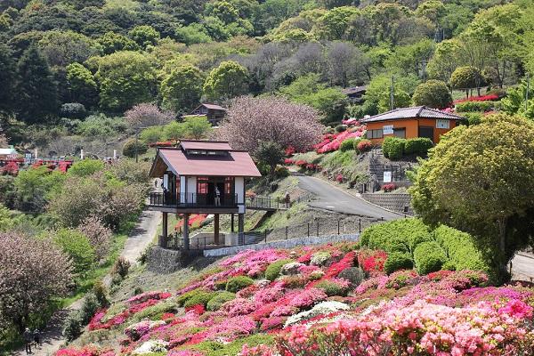 歌垣公園のツツジの様子の写真(ツツジ、展望所、ロッジ)