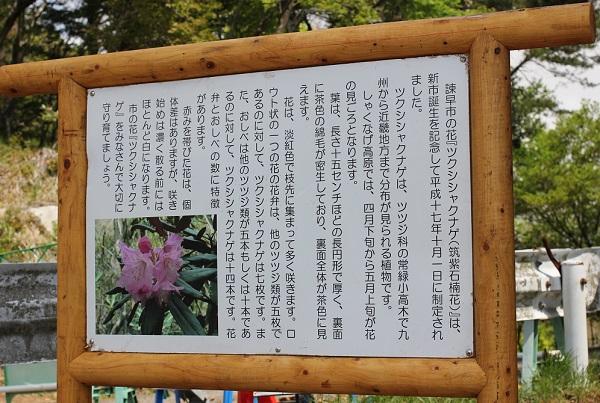 ツクシシャクナゲ(筑紫石楠花)の説明看板の写真