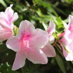 斑点模様があるピンクの花の写真