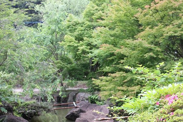 皿山公園、モミジや新緑の写真
