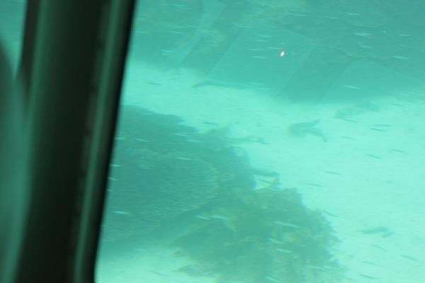 シーガルの下部の客席のガラス窓からみた海の様子
