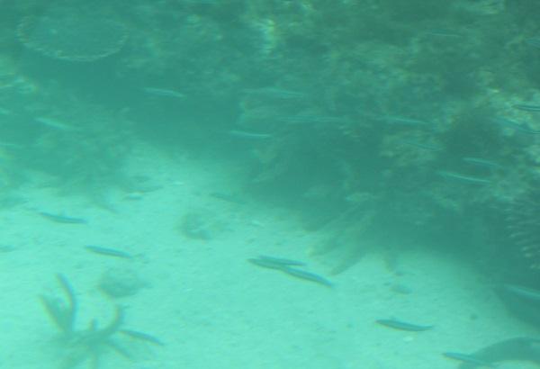 シーガルの下部の客席のガラス窓からみた海底の様子