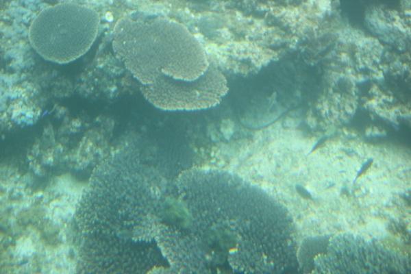 天然の水族館みたいな竹の子島周辺の海底