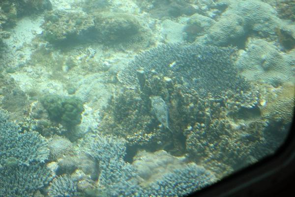 サンゴとフグ
