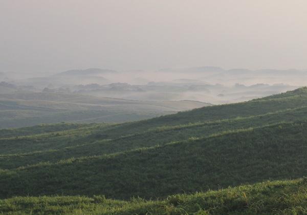 大観峰、草原と雲海の様子