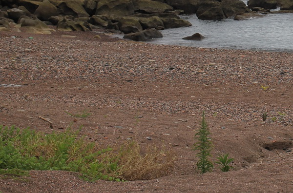 「ぜぜヶ浦」赤い砂の様子