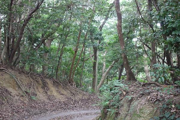「ぜぜヶ浦」へ下る山道の写真
